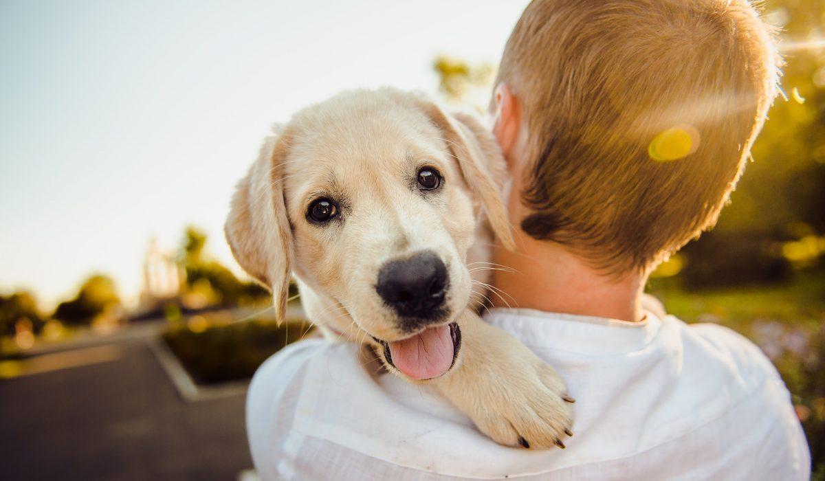 Cachorros já nascem prontos para interagir com humanos, afirma estudo