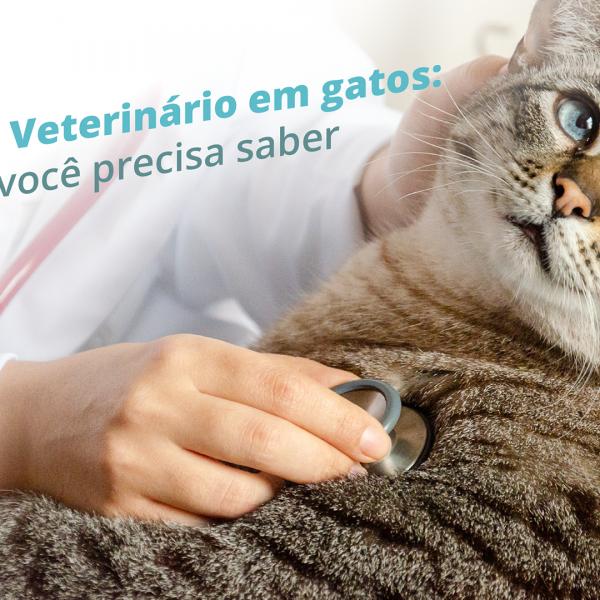 Check up Veterinário em gatos: tudo que você precisa saber